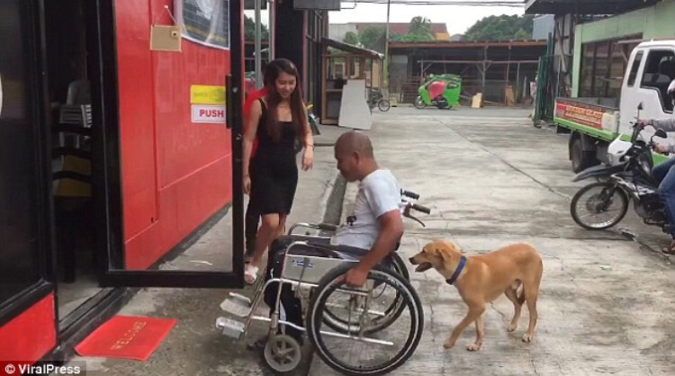 Dog Pushes His Disabled Owner