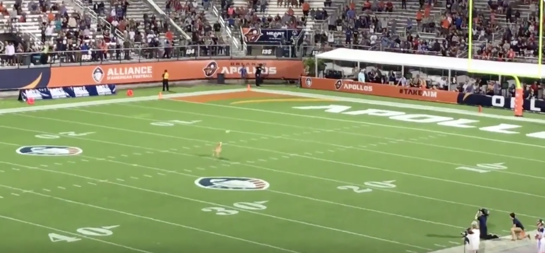 This 83 Yard Reception To A Dog Is Better Than Any Highlight From The Super Bowl