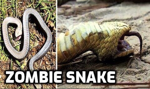 First Zombie Deer… Now Zombie Snakes in PA??!!