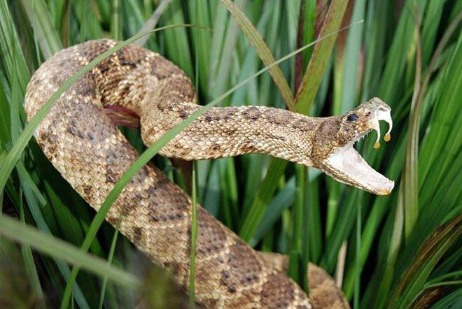 Radioactive Rattlesnake In My Backyard