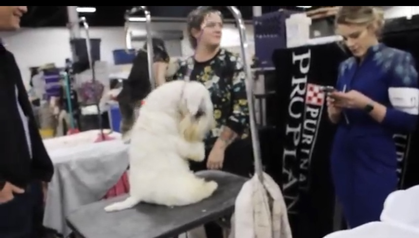 Branded Sports Investigates: Dog Shows