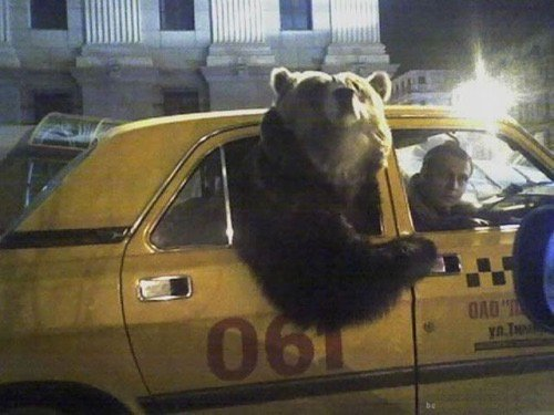 The #DelaBear Is Wreaking Havoc On The Townspeople of Wilmington