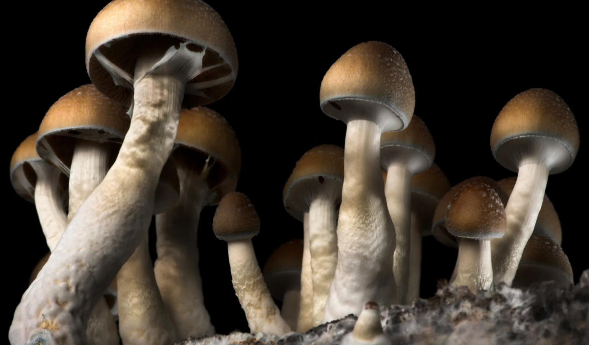 Oregon Became The Cool State By Making Shrooms Legal Last Night